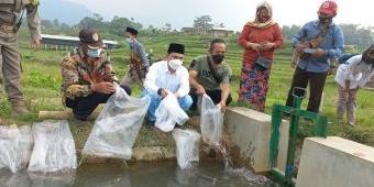 Dukung Penuh Kawasan Wisata Organik, Gus Barra Tebar 5.000 Benih Ikan Nila di Desa Penanggungan