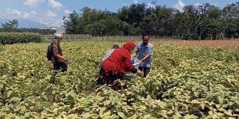 Bantu Petani, ASN Kota Kediri Borong Hasil Panen