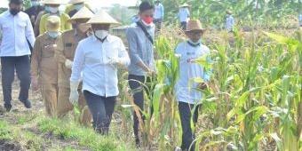 Gelar Sapa Petani, Bupati Gus Yani Ingin Jadikan Desa Setro Pilot Project Ekosistem Pertanian Gresik