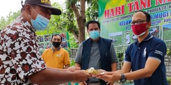 Peringati Hari Tani Nasional, Petani di Kabupaten Kediri Keluhkan Harga Pupuk yang Mahal
