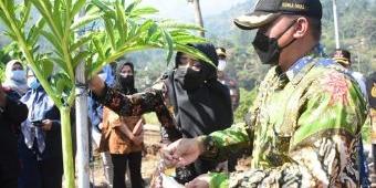Didampingi Kepala Dinas Pertanian Mojokerto, Bupati Ikfina Tinjau Panen 15 Ton Porang di Desa Jembul