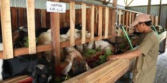 Peternak Sidoarjo Sukses Kelola Minimarket Kambing Kurban, Omzetnya Tembus Ratusan Juta